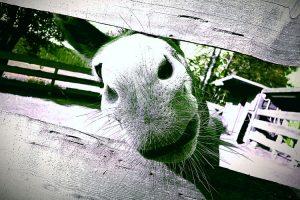 jan-dirk mueller-esdohr - hof/saale: begruessung