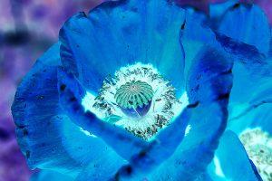 jan-dirk mueller-esdohr - hof/saale: blaue blume