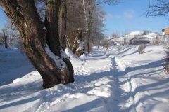 mla-Winter an der Saale